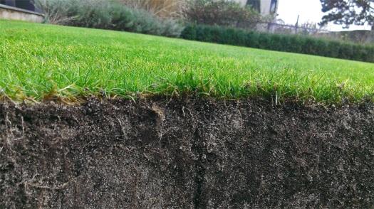 Dobře prorostlý trávník.
