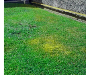 Likvidace mechu v trávníku na jaře.