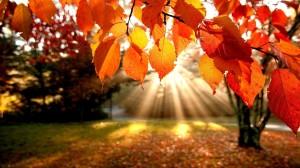 podzim-na-travniku